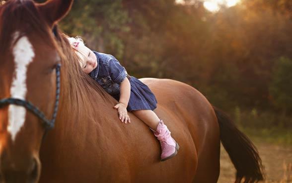 Koń i człowiek