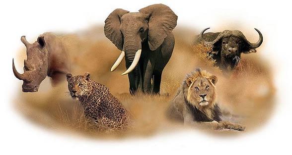 Wielka 5 Afryki