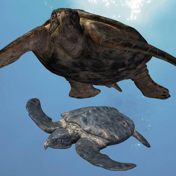Żółw Archelon ischyros