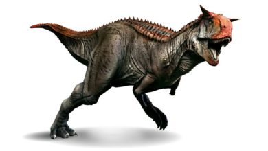 Photo of Karnotaur (Carnotaurus)
