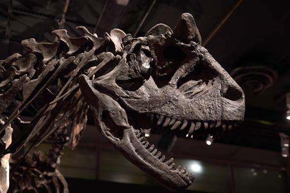 Karnotaur (Carnotaurus).