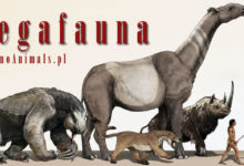 Photo of Megafauna