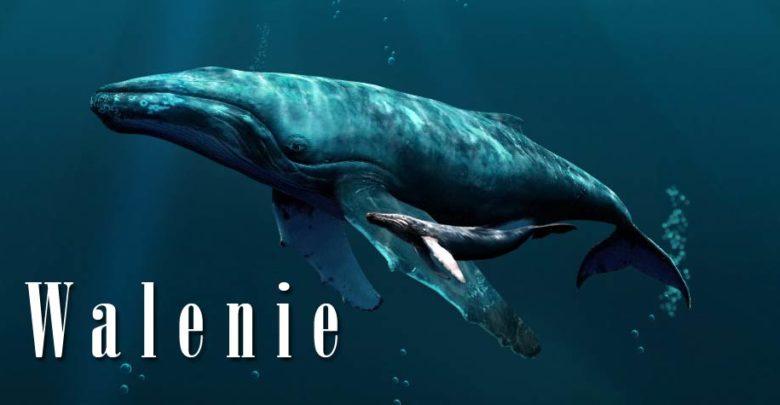 Photo of Walenie (Cetacea)