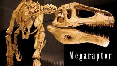 """Photo of Megaraptor – """"wielki złodziej"""""""