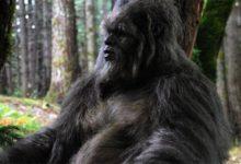 Photo of Wielka Stopa czyli Bigfoot albo Sasquatch