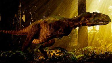 Photo of Abelizaur (Abelisaurus) – tajemniczy dinozaur