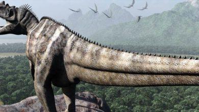 Photo of Ceratozaur (Ceratosaurus)