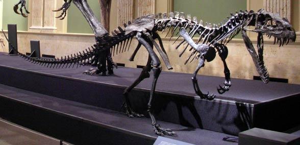 grootste zee dinosaurus