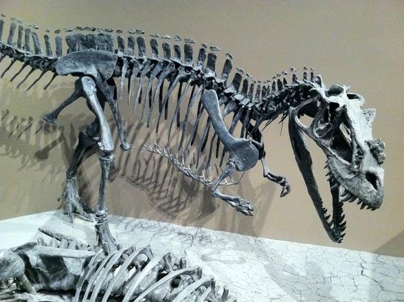 Ceratozaur (Ceratosaurus).
