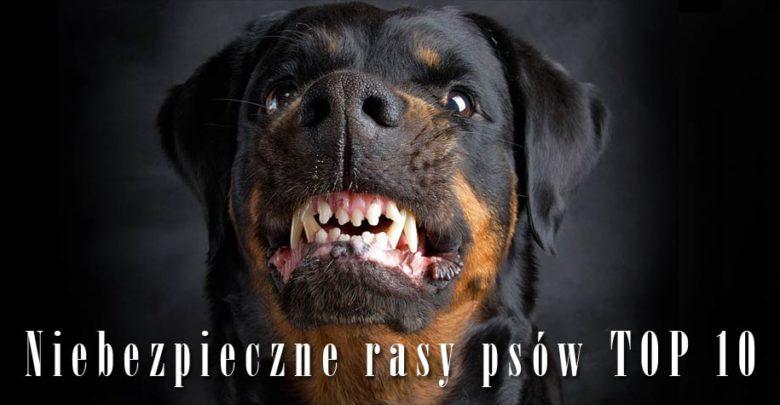 Photo of Agresywne rasy psów – TOP 10
