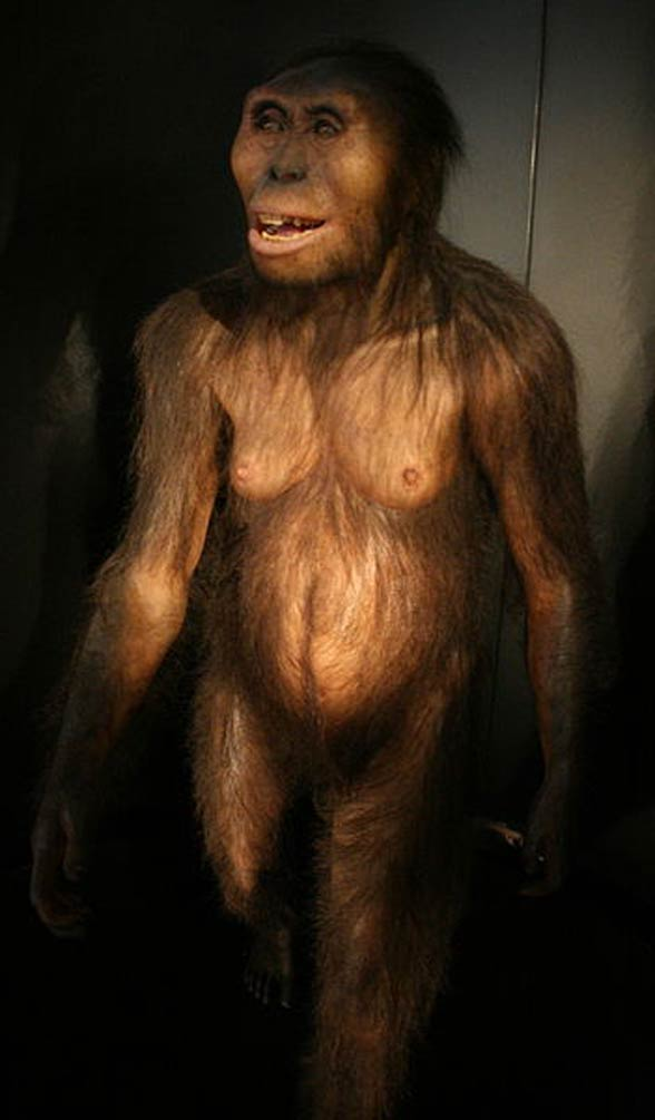 Australopitek (Australopithecus)