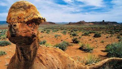 Photo of Prenocefal (Prenocephale) – zadziorny dinozaur