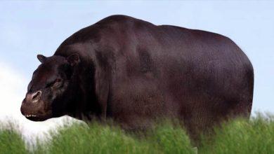 Photo of Toxodon – jedno z najdziwniejszych zwierząt