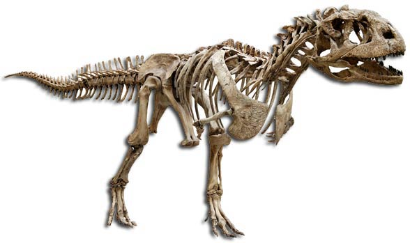 Mażungazaur (Majungasaurus).