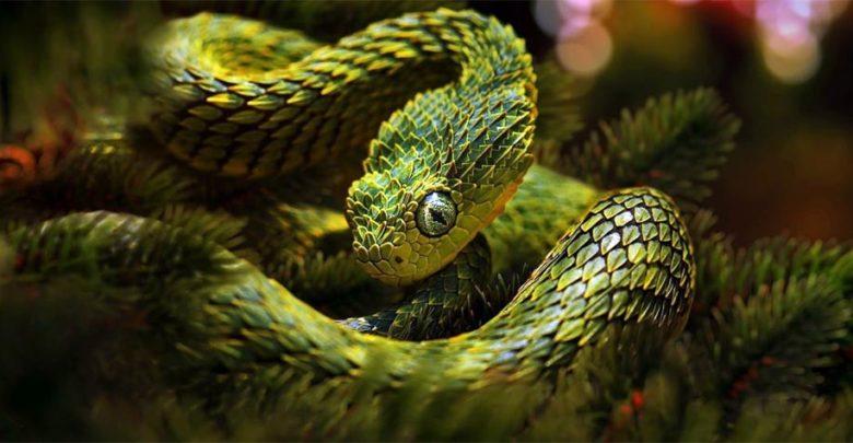 Photo of Węże (Serpentes) – piękne i groźne