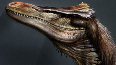 Photo of Austroraptor