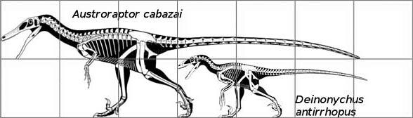 Austroraptor i Deinonychus.