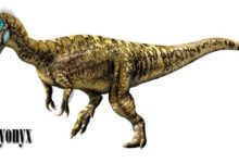 Photo of Barionyks (Baryonyx walkeri)