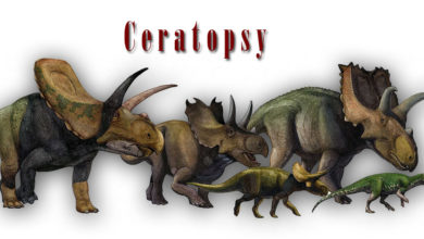 Photo of Ceratopsy (Ceratopsia) – niezwykłe dinozaury