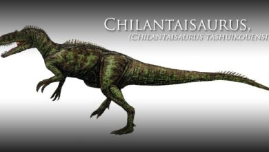 Photo of Czilantajzaur (Chilantaisaurus)