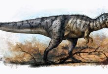 Photo of Jangczuanozaur (Yangchuanosaurus)