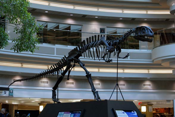 Jangczuanozaur (Yangchuanosaurus)