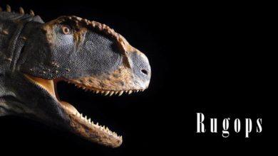 Photo of Rugops – afrykański drapieżca