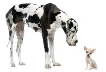 Photo of Największe psy – TOP 10