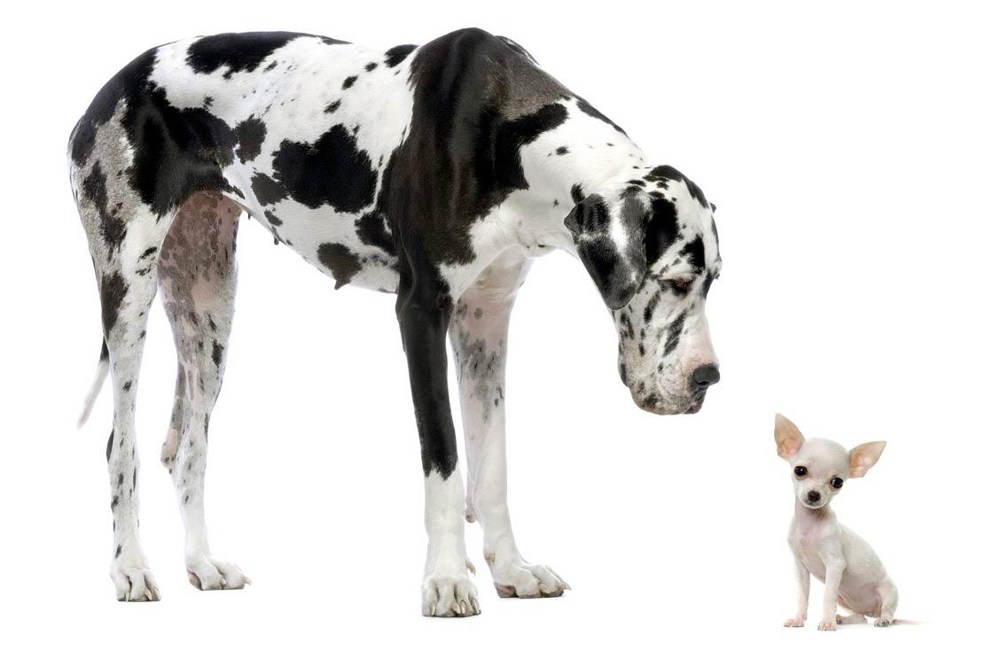 Dinoanimals Pl: Największe Psy – TOP 10