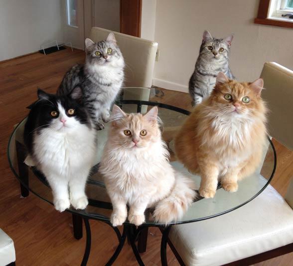 Koty Cymric