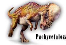 Photo of Pachycefalozaur (Pachycephalosaurus)