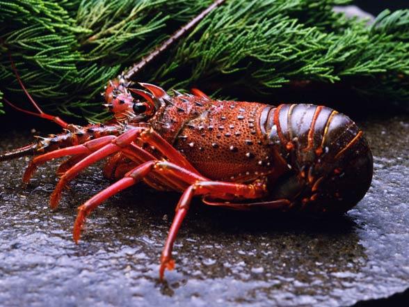 Skorupiaki (Crustacea)
