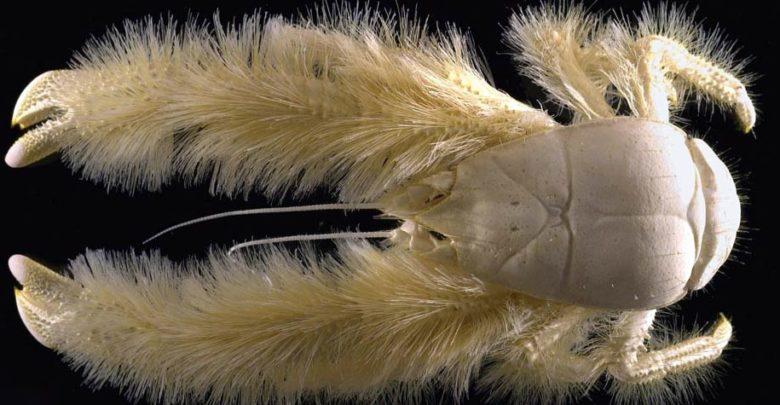 Photo of Królestwo zwierząt – skorupiaki (Crustacea)