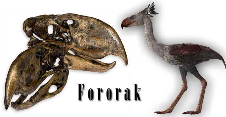 Photo of Fororak (Phorusrhacos) – przerażający ptak
