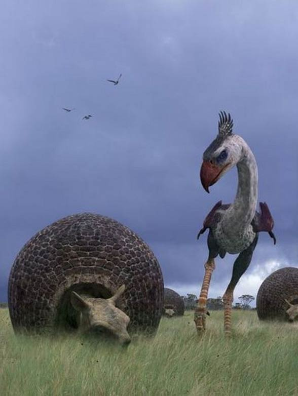 Fororak (Phorusrhacos)