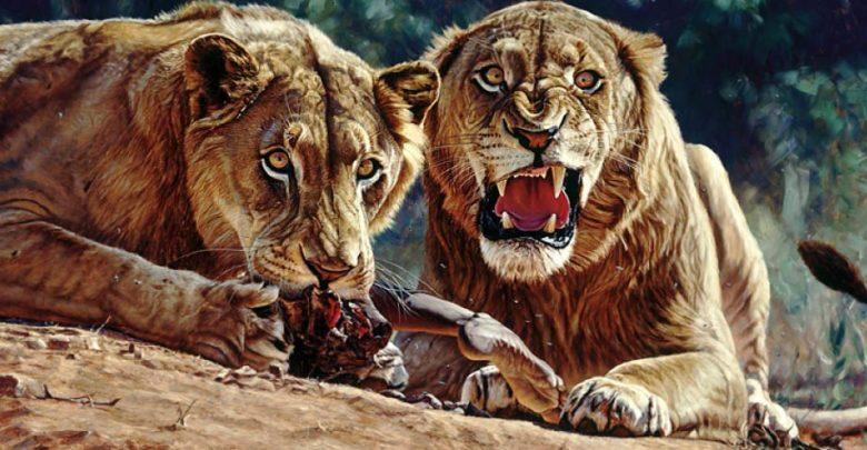 Photo of Lwy z Tsavo – ludożercy z Tsavo