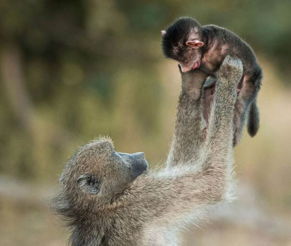 Emocje i uczucia zwierząt