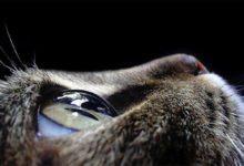 Photo of Emocje i uczucia zwierząt