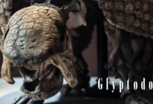 Photo of Glyptodon – chodząca forteca