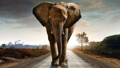 Photo of Palaeoloxodon – największy słoń w historii