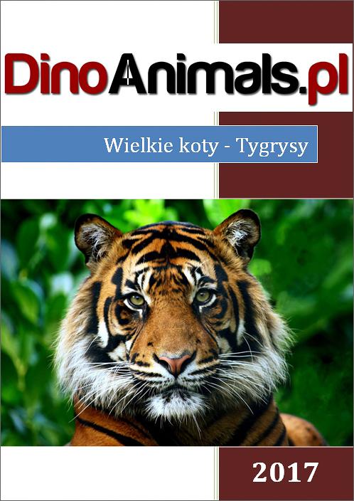 Wielkie koty - tygrysy