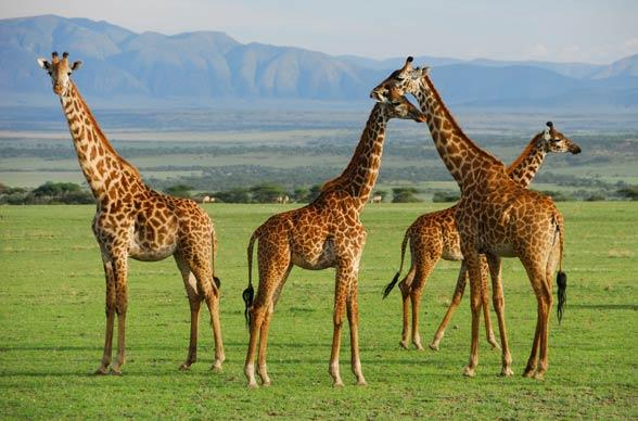 Park Narodowy Serengeti