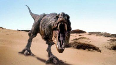 Photo of Król dinozaurów jest tylko jeden