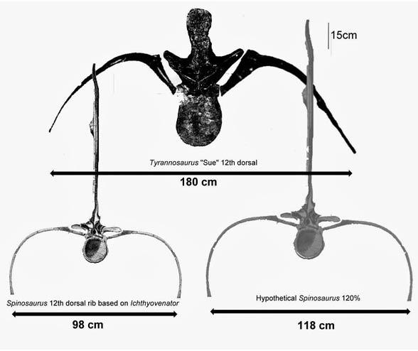 Porównanie tyranozaura z hipotetycznie największym osobnikiem spinozaura (u dołu po prawej)