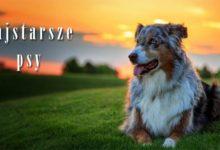 Photo of Najstarsze psy świata – TOP 10