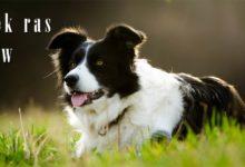 Photo of Najdłużej żyjące rasy psów – TOP 10