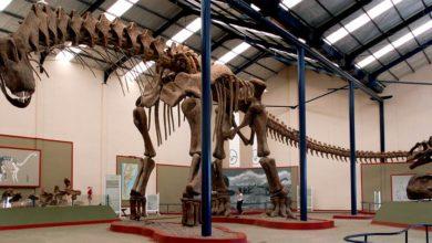 Photo of Argentynozaur (Argentinosaurus) i jego historia