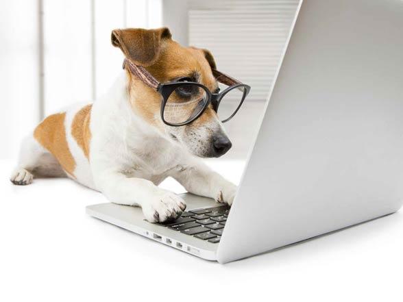 Inteligencja psow