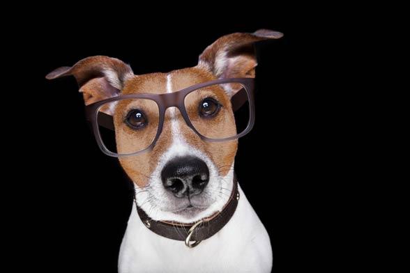 Inteligencja psów