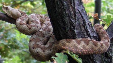 Photo of Najbardziej jadowite węże Europy – TOP 10